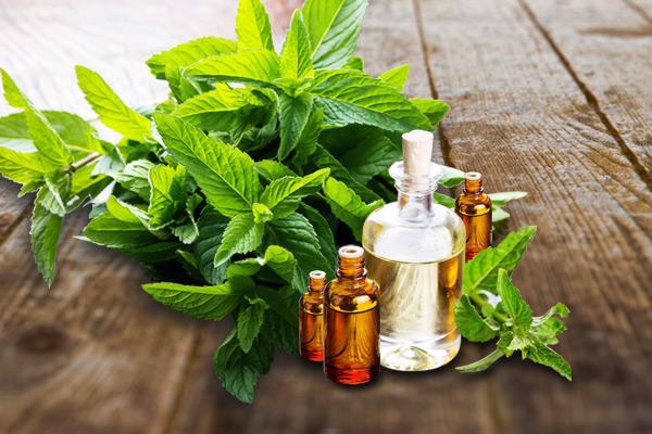 Manufacturer & Exporter of Natural Essential Oils, Bulk Supplier