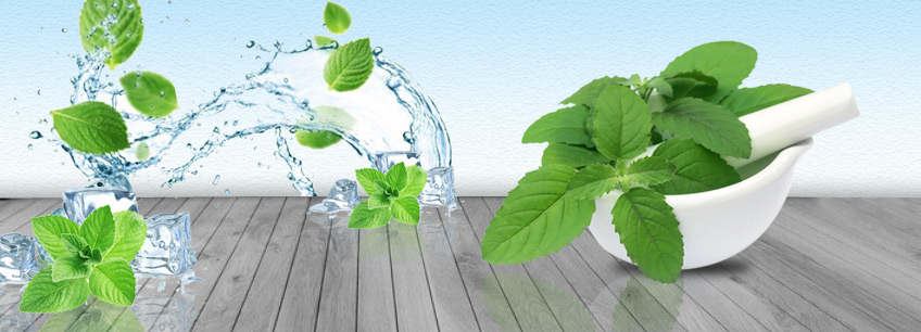 Molten Menthol, Molten Menthol Suppliers and Manufacturers